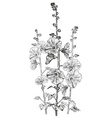 Hand Drawn Bindweed Flower Sketch vector image vector image
