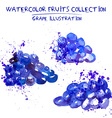 Hand drawn watercolor grape set vector image