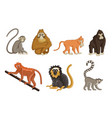 cartoon monkeys wildlife and zoo animals vector image