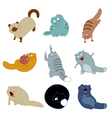 Colection of cats 2 vector image vector image