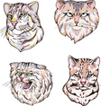 Heads of cats set vector image vector image