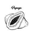 papaya black and white vector image vector image