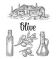 set olive bottle glass branch with leaves rural vector image vector image