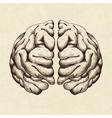 sketch human brain vector image vector image