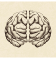 sketch human brain vector image