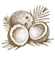 engraving coconuts vector image vector image