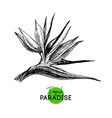 hand drawn sketch tropical paradise plant bird of vector image