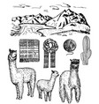 ink hand drawn alpaca icon set vector image vector image
