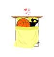 lover basketball guy and ball in bed lovers in vector image vector image