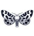 tattoo spotty butterfly arctia caja americana vector image