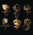 lotus flowers vector image