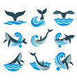 wild whale in sea waves and water splashes vector image