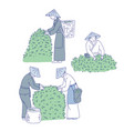 asian workers harvests tea leaves from bush vector image