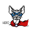 cat hero portrait with mask and hero star vector image vector image