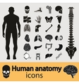 Human anatomy icons vector | Price: 1 Credit (USD $1)