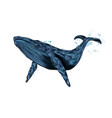 humpback whale blue whale from a splash of vector image vector image