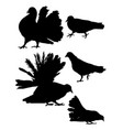 pigeon dove detail silhouette 02 vector image vector image