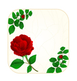 Button square cracks in the porcelain and rose vector image vector image