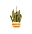green hanging potted cacti house plant elegant vector image