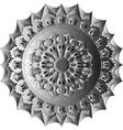 skull mandala circe vector image vector image