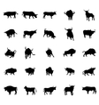 Bull silhouettes set vector image vector image