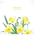 Narcissus spring background vector image vector image