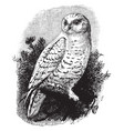snow owl vintage vector image vector image
