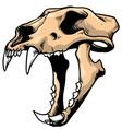 tiger skull vector image