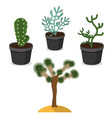 desert plants isolated vector image vector image