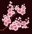sakura flower branch element elegant vector image