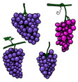set grape branch on white background design vector image vector image