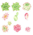 watercolor cactus and succulent elements vector image vector image