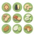 Nuts icon set peanut cashew pistachio and vector image
