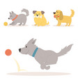 cute playing dogs characters vector image