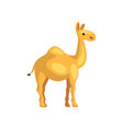 egyptian camel cartoon character of desert animal vector image vector image