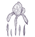 hand-drawn iris set in on white background vector image
