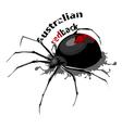 Australian redback vector image vector image