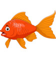 cartoon golden fish isolated on white background vector image vector image