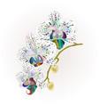 orchid phalaenopsis stem multi colored flowers vector image