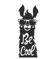 with stylish llama animal in sunglasses be cool vector image vector image