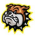 angry bulldog head mascot logo design vector image vector image