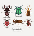 bugs ans beetles hand drawn insects vector image vector image