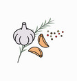 garlic cloves and rosemary and spices on white vector image
