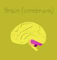 human organ icon in flat style brain vector image vector image