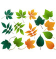 leaves autumn leaves set isolated on vector image