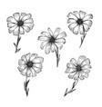vintage black outline ink pen sketch chamomile vector image vector image