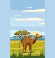 camel cute cartoon style in background savannah vector image vector image