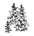 hand drawn winter fir trees vector image