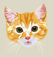 muzzle pretty beautiful red-haired kitten vector image vector image