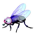 funny fly with big eyes isolated on white vector image